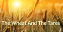 Wheat and The Tares PNG